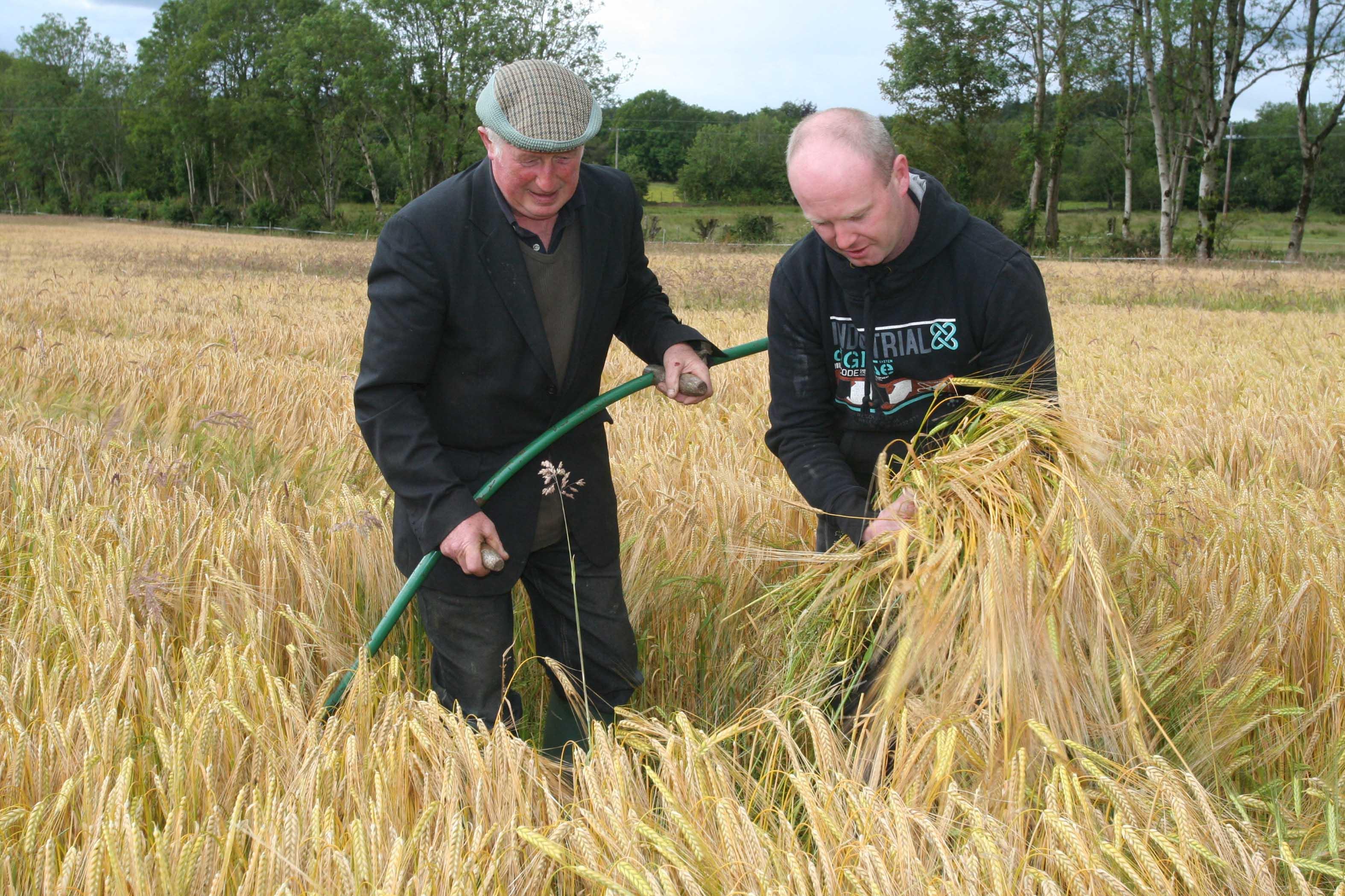 Cutting-Winter-Barley2